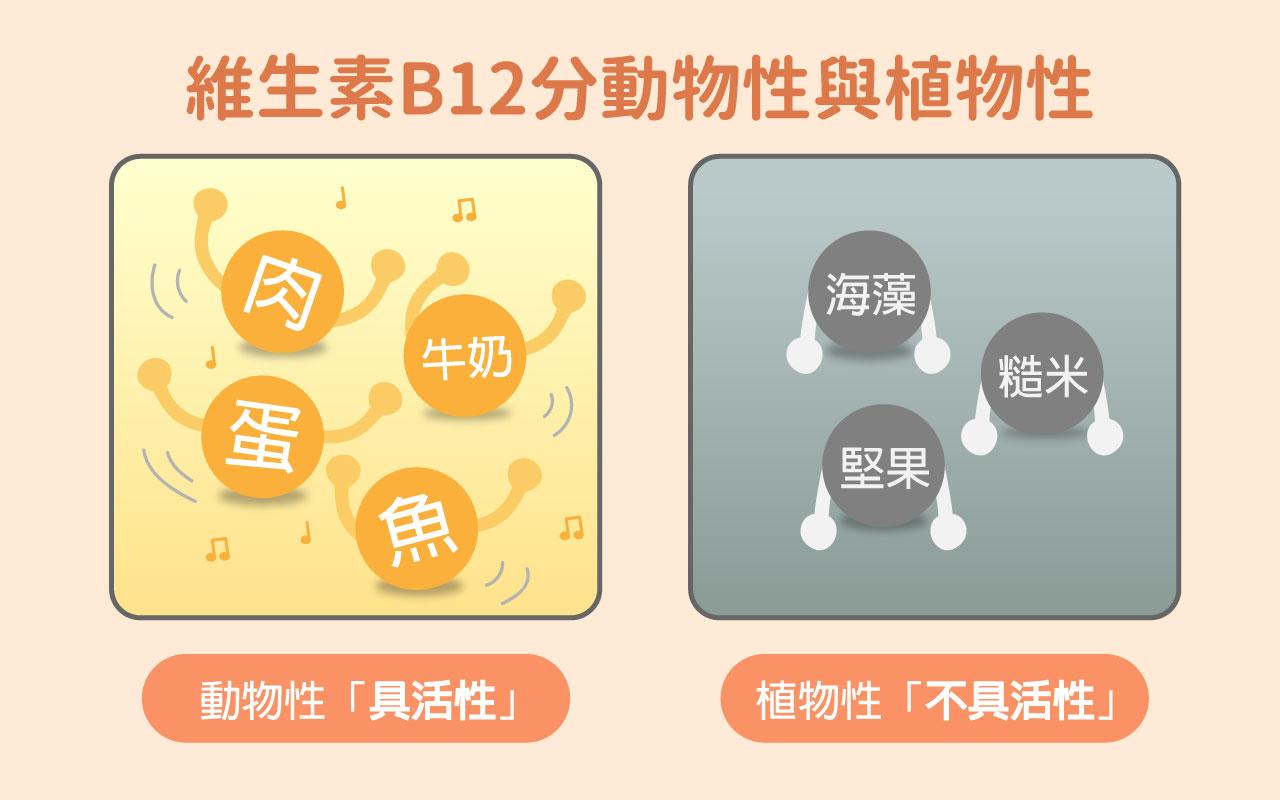 維生素B12分動物性與植物性