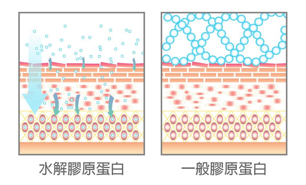 膠原蛋白的差別